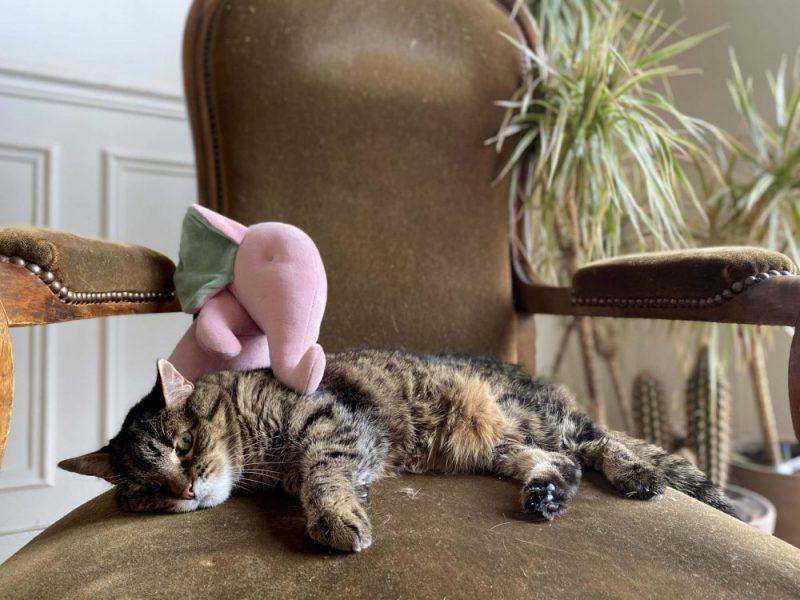 Pachi rose dragée + chat